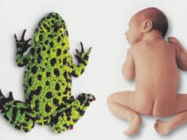 Физиология новорожденного